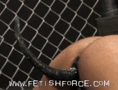 Dog Fight - Forte